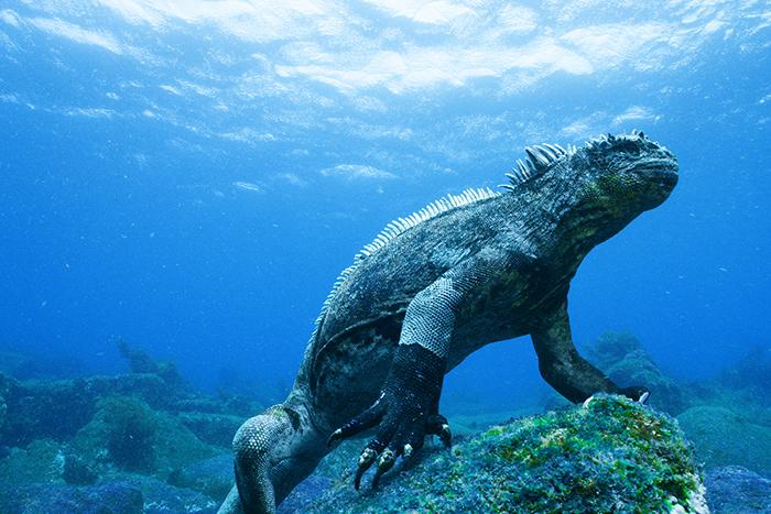 la iguana y la creación de valor compartido 12