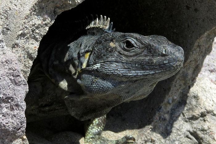 la iguana y la creación de valor compartido 4