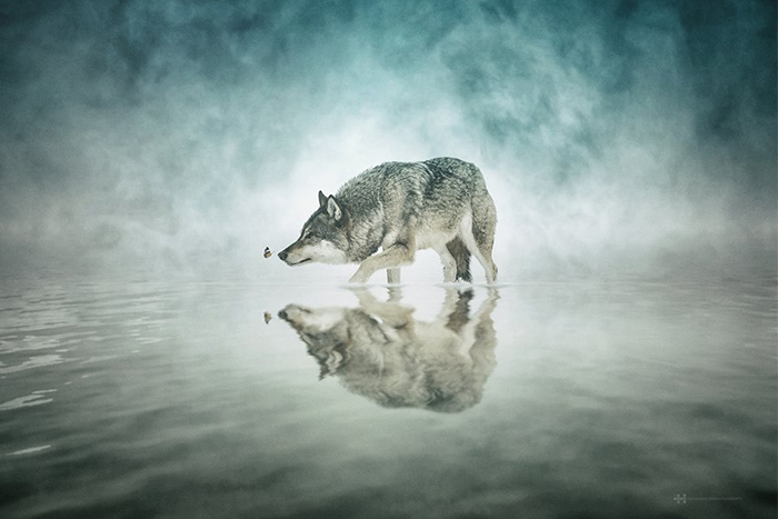 animal reflection photo series 2
