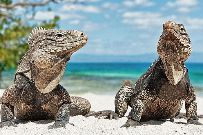 la iguana y la creación de valor compartido 3