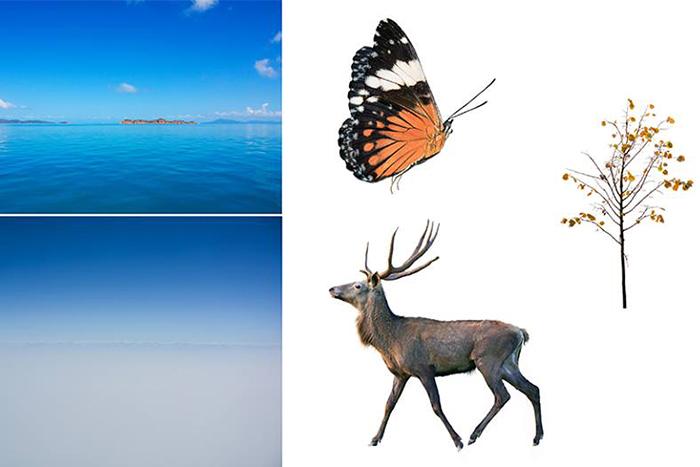 animal reflection photo series 1