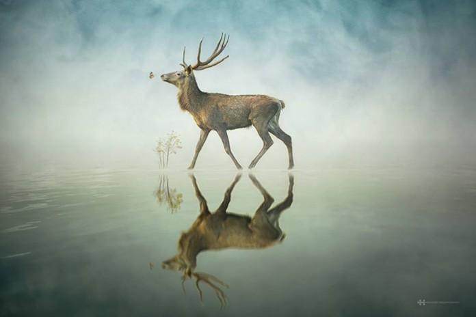 animal reflection photo series 3